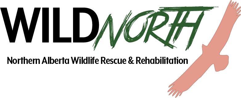 WILDNorth Wildlife Rescue & Frontline Internship Application Form