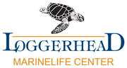 Loggerhead Marinelife Center Login
